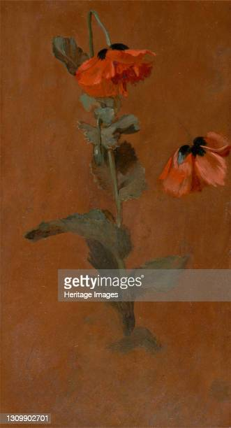 Study of Poppies;Poppies, 1832. Formerly attributed to John Constable Artist James Inskipp. .