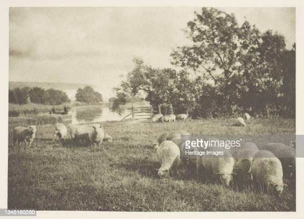 "Study of Sheep, circa 1880/90, printed April 1890. Photogravure, from ""Sun Artists, no. 3"" . Artist J. B. B. Wellington."
