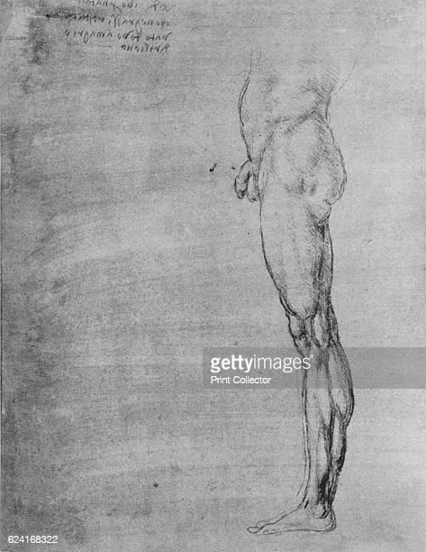 Study of the Body and Leg of a Man' c1480 From The Drawings of Leonardo da Vinci [Reynal Hitchcock New York 1945] Artist Leonardo da Vinci