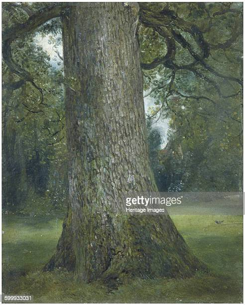 Study of the Trunk of an Elm Tree c 1824 Found in the collection of Victoria and Albert Museum Artist Constable John