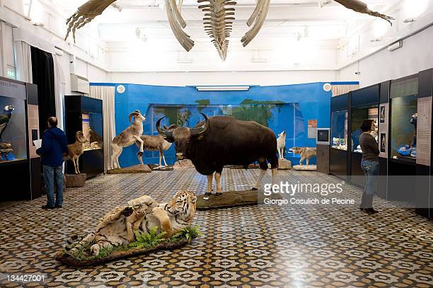 Stuffed animals are displayed during the press preview of the exhibition 'The Art of Taxidermy' at a zoological museum on December 1 2011 in Rome...