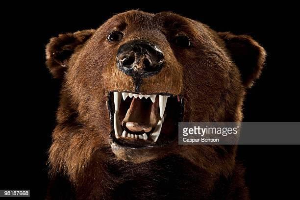 A stuffed bear head