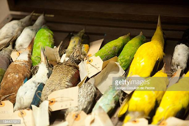 Stuffed birds are displayed during the press preview of the exhibition 'The Art of Taxidermy' at a zoological museum on December 1 2011 in Rome Italy...