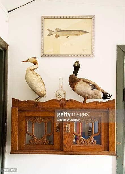 Stuffed birds on a cupboard.
