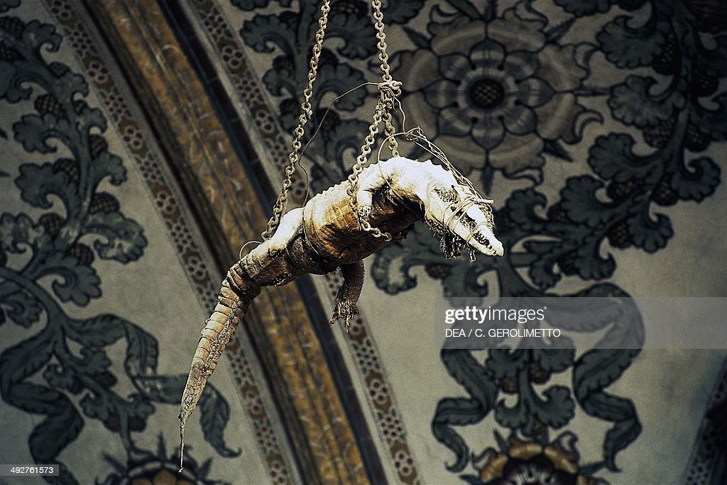 Stuffed crocodile hanging from the vault... : News Photo