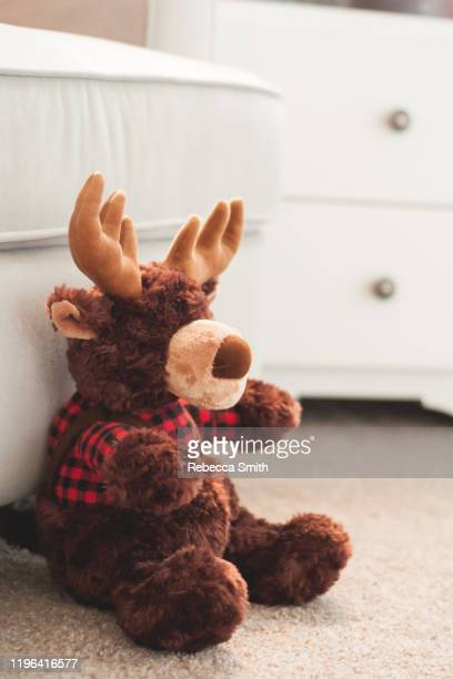 stuffed moose - dolly fox stock pictures, royalty-free photos & images