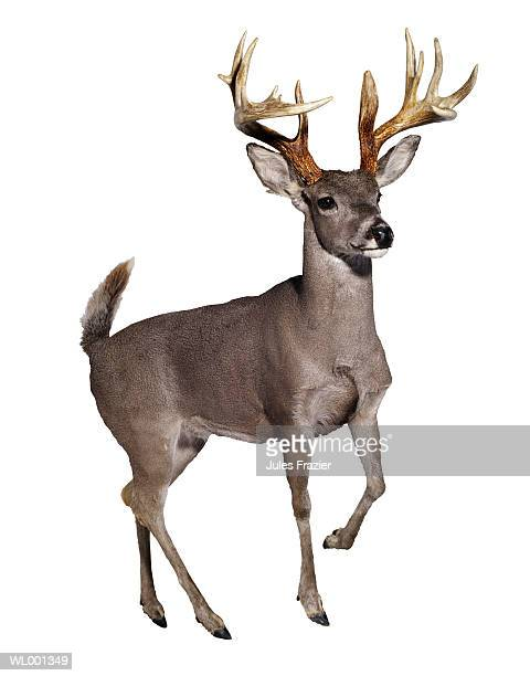 stuffed mule deer - one animal stock pictures, royalty-free photos & images