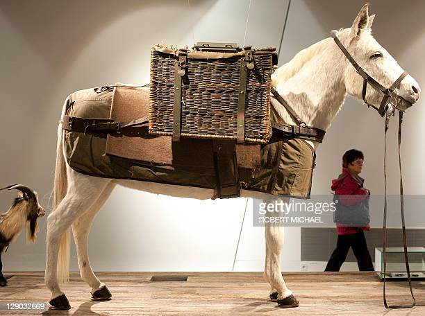 A stuffed mule in an exhibit showing the roles of animals in war is on display at the Museum of Military History in Dresden eastern Germany on...