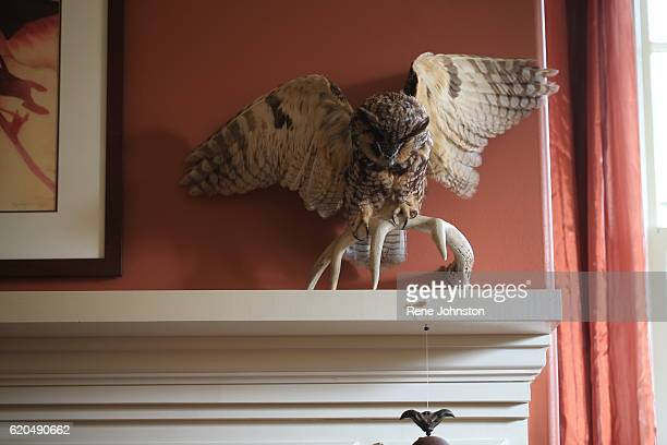 TORONTO ON October 31 A stuffed owl on the original mantel Andrea Mathieson is the owner of The Rupert House A piece of Torontoarea history is on the...
