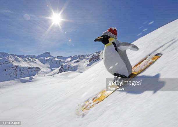 stuffed penguin skiing - スキー板 ストックフォトと画像