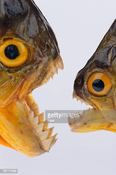 Stuffed Piranha
