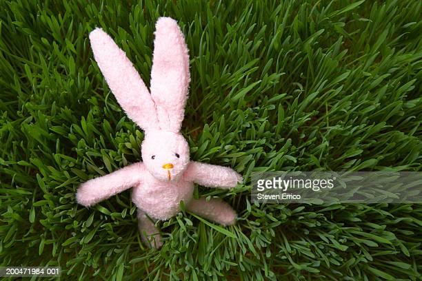 Stuffed rabbit in tall wheatgrass, overhead view