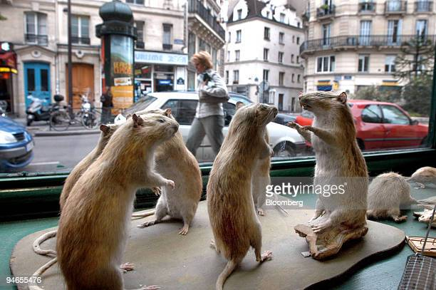 Stuffed rats sit in the window of the Auroze pest control shop in Paris France on Friday August 10 2007 In 'Ratatouille'' the recent cartoon movie...