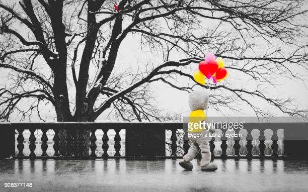 stuffed toy and balloons on footpath against trees - isolated color stock pictures, royalty-free photos & images