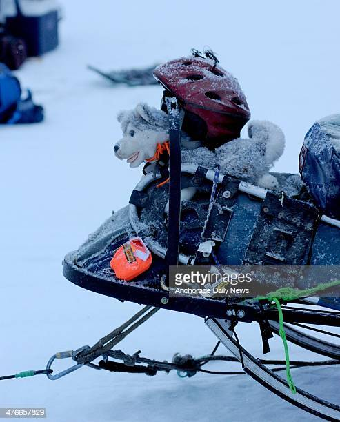 A stuffed toy husky wearing a helmet sits on the front of the sled of Nicolas Petit at the Nikolai checkpoint during the 2014 Iditarod Trail Sled Dog...