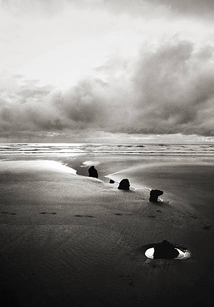Stumps leading out to sea