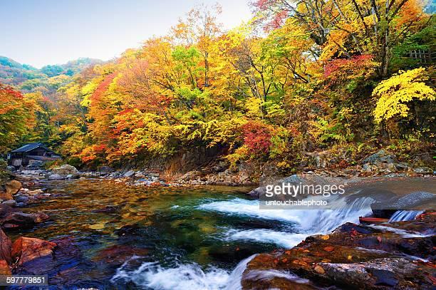 Stunning autumn in Gunma, Japan