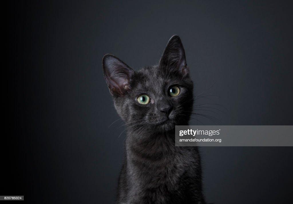 Stunning Black Kitten - The Amanda Collection : Foto de stock