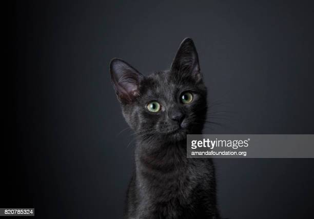 superbe chaton noir - chat photos et images de collection