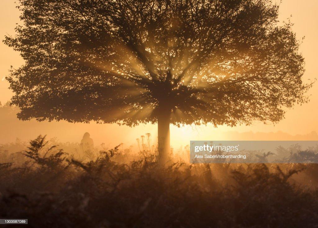 A stunning misty sunrise and light rays one autumn in Richmond Park, Richmond, Greater London, England, United Kingdom, Europe : Stock Photo