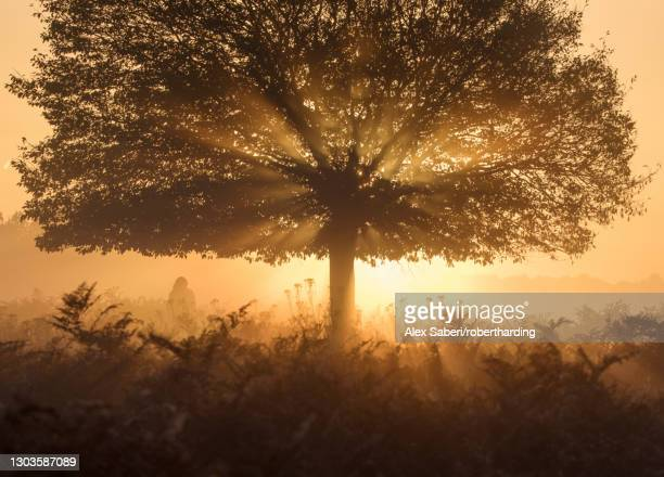 a stunning misty sunrise and light rays one autumn in richmond park, richmond, greater london, england, united kingdom, europe - alex saberi photos et images de collection
