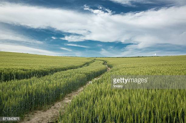 Stunning panorama view at a wheat field