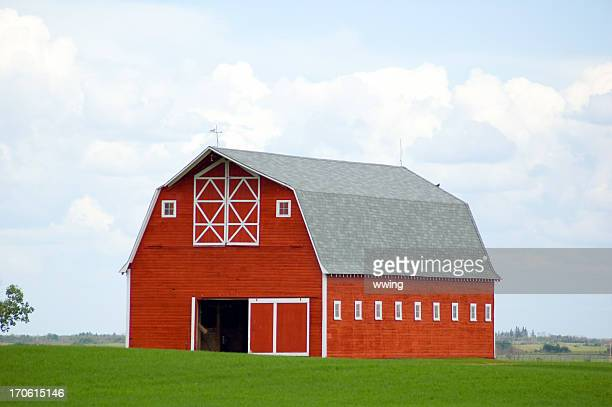 Stunning Red Barn in Green Field - Grain Crop