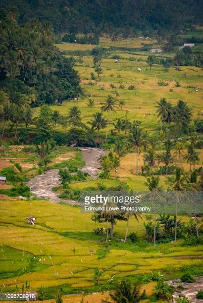 Stunning Rice Terraces of Pupuan, Bali.