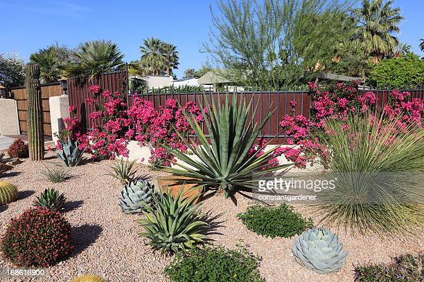 stunning succulent and cactus water conservation garden - landscaped stock pictures, royalty-free photos & images