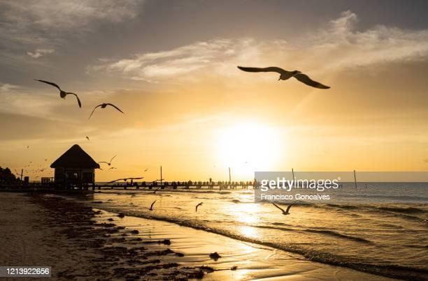 stunning sunset at holbox island in quintana roo, mexico - isla holbox fotografías e imágenes de stock