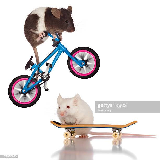 Stunt Mice; Bicycle Riding Mouse Jumping Over Skateboarder Friend