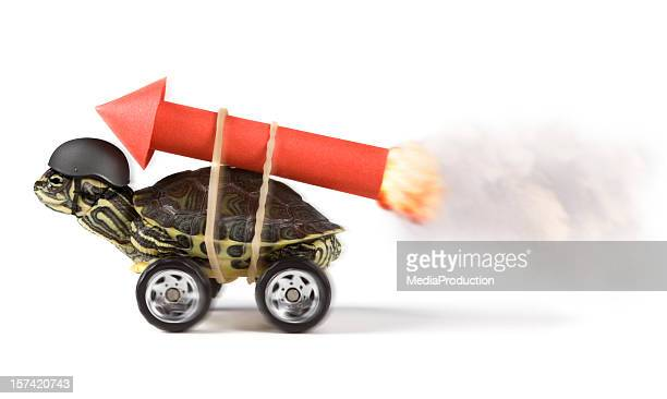 stunt - funny animals stock pictures, royalty-free photos & images