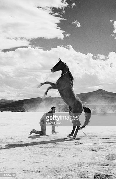 A stuntman tries to mount a rearing mustang during the filming of 'The Misfits' in the Nevada desert