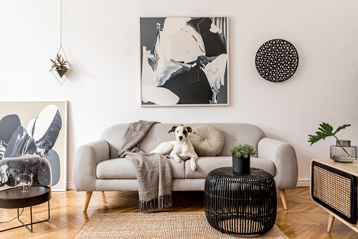 Stylish and scandinavian living room interior of modern apartment with gray sofa, design wooden commode, black table, lamp, abstrac paintings on the wall. Beautiful dog lying on the couch. Home decor. 1172207142