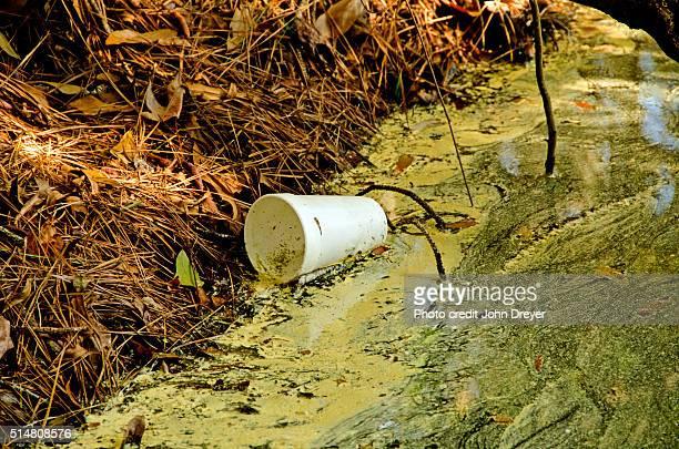 Styrofoam Litter in Wetland