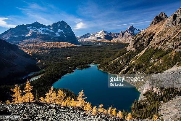 subalpine larch above lake o'hara - leckert stock pictures, royalty-free photos & images