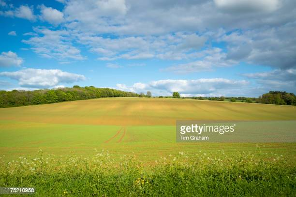 Subtle colour and contours of a crop field and puffy clouds in late spring early summer in the Gloucestershire Cotswolds United Kingdom