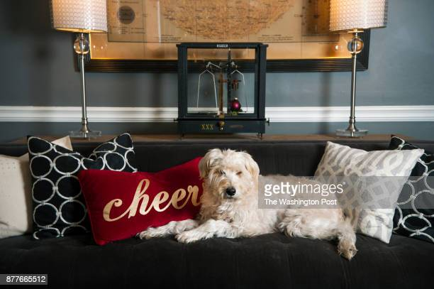 Subtle holiday decorations such as a bright red pillow and an ornament placed on the gold scale grace the living room couch where Lucy a Wheaton...