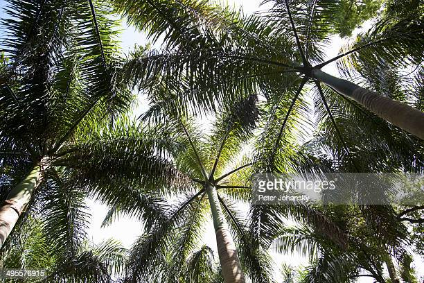 subtropical flowers and plants - vero beach stock pictures, royalty-free photos & images