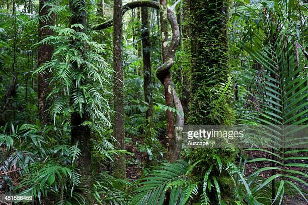 Subtropical rainforest along Bat Cave Creek Nightcap National Park New South Wales Australia
