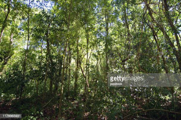 subtropical rainforest at misiones province - subtropical climate stock photos and pictures