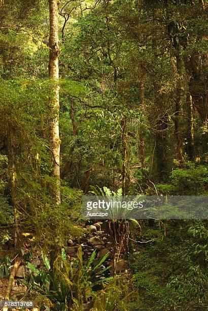 Subtropical rainforest Lamington National Park southern Queensland Australia