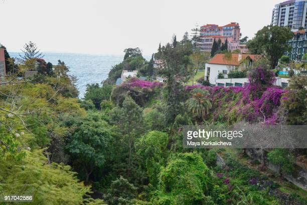 Subtropical streets of Funchal city Madeira island, Atlantic ocean, Portugal