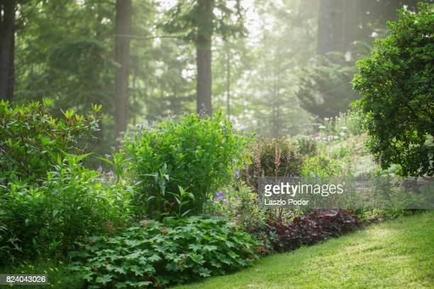 a suburban residential garden in halifax - flowering plant stock photos and pictures
