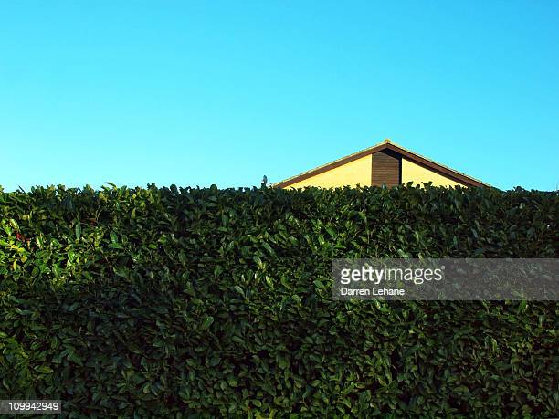 a suburban view - hedge stock pictures, royalty-free photos & images