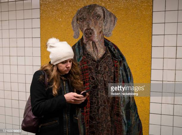 Subway passenger gazes at the murals of artist William Wegman's famous Weimaraners at the 23rd Street MTA station in midtown New York City on March...