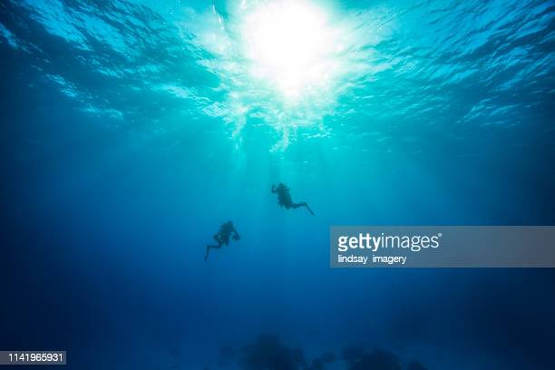 sucba diving - undersea stock photos and pictures