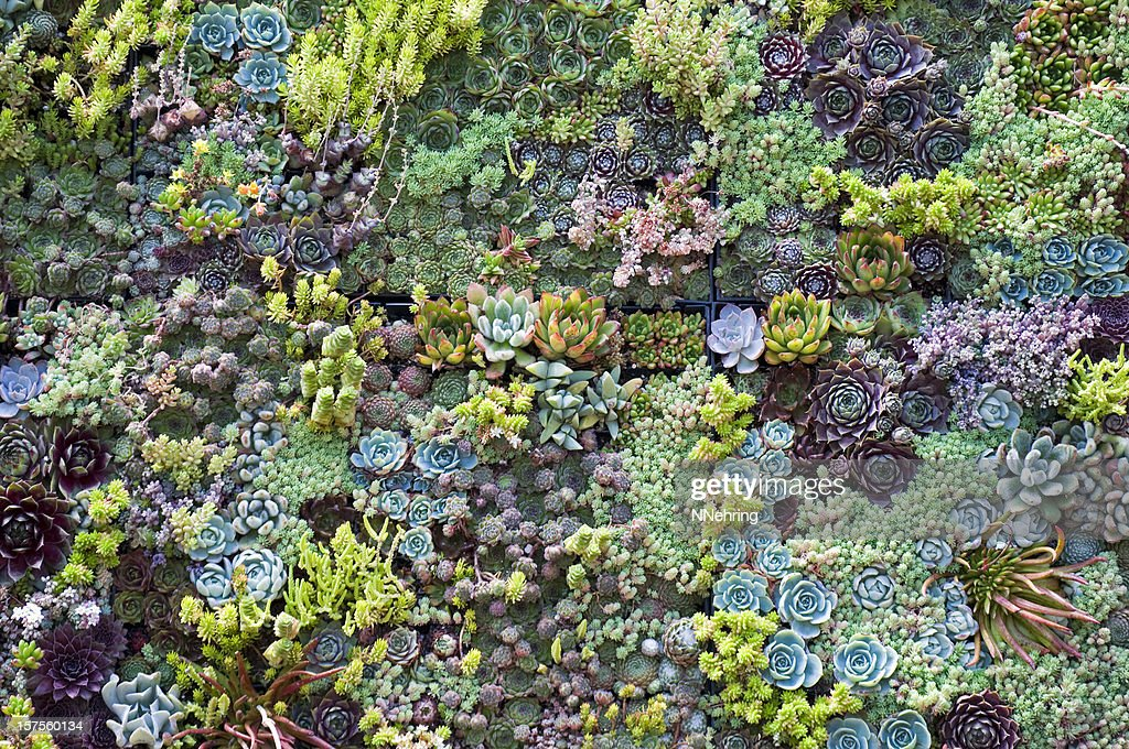 96 444 Succulent Plant Photos And Premium High Res Pictures Getty Images