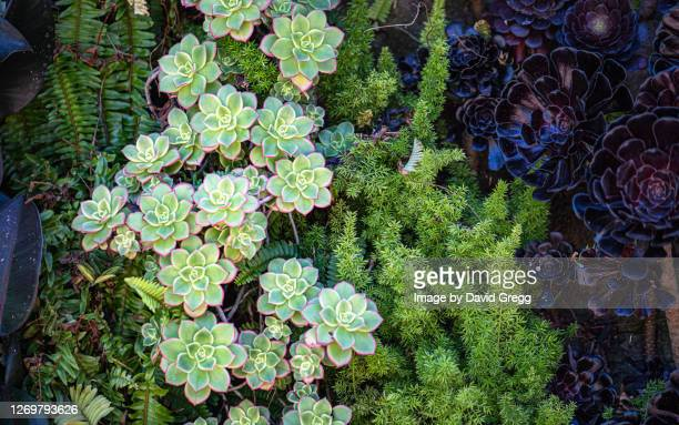 succulent garden 1 - rancho palos verdes stock pictures, royalty-free photos & images