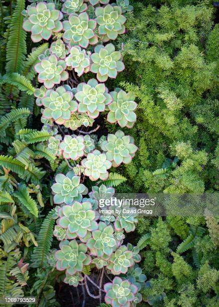 succulent garden 2 - rancho palos verdes stock pictures, royalty-free photos & images